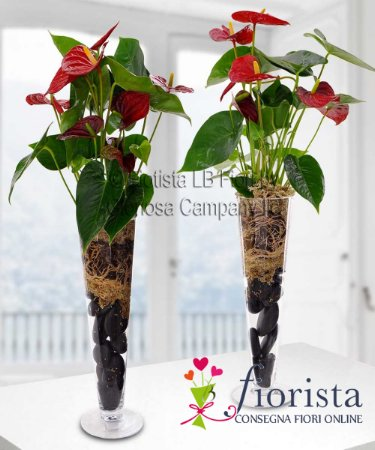 Pianta di Anthurium con vaso in Vetro