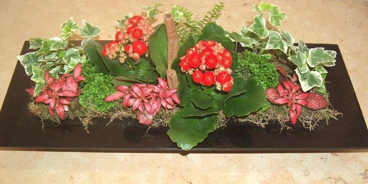 Composizione di piante in ciotola consegna fiori online for Catalogo piante e fiori