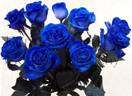 Consegna rose blu a domicilio mazzo di rose blu a gambo for Disegni e prezzi del mazzo